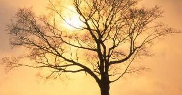 l'autunno, il cambiamento, malessere psicologico