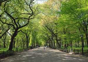parco, La natura migliora la concentrazione