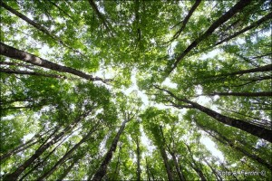 come vincere lo Stress, passeggiare nel verde
