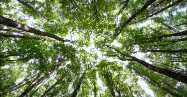 stress natura foreste