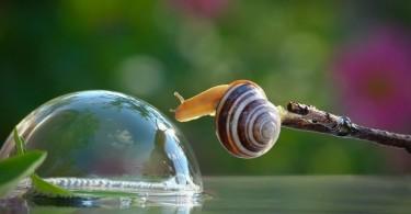 lumaca con bolla, coltivare la gentilezza