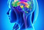 Stress e difese immunitarie, psicologia e psicoimmunologia