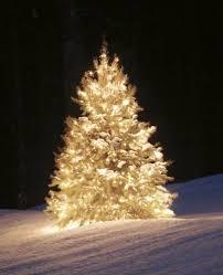 Albero di Natale come simbolo del ciclo di vita
