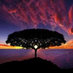 Albero al tramonto, terapia psicologica, come guarire