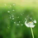 fiore, cognitivismo verso meditazione e mindfulness