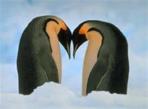 Pinguini in amore, psicologia di coppia e relazioni