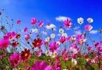 fiori, come raggiungere la serenità dell'essere